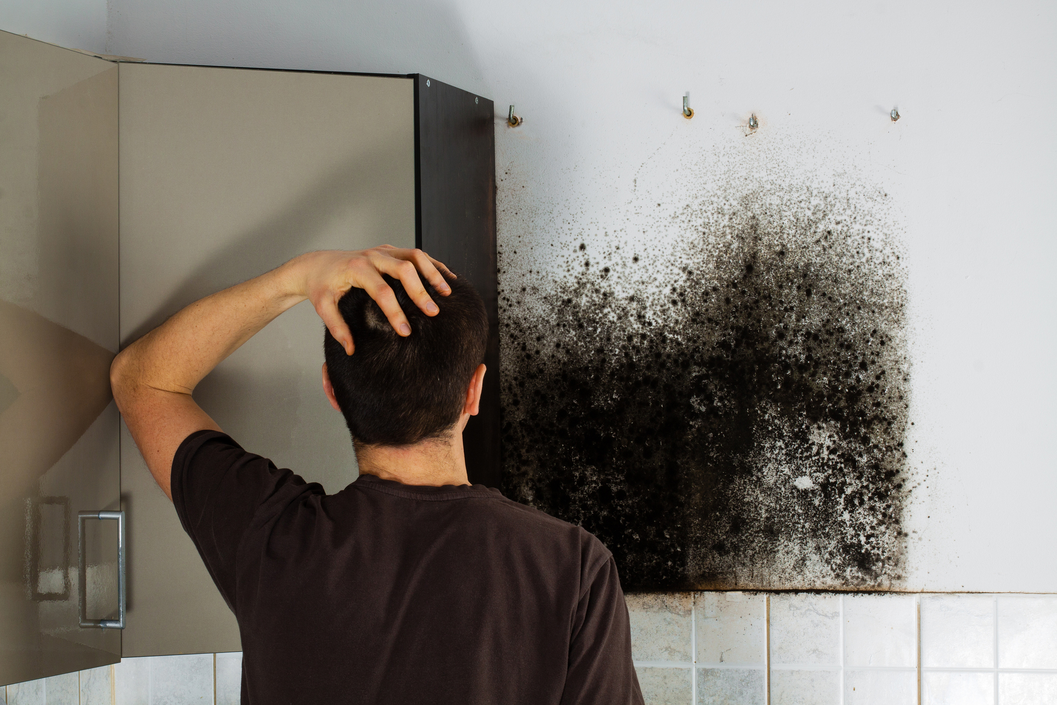 Mold Removal Burnaby