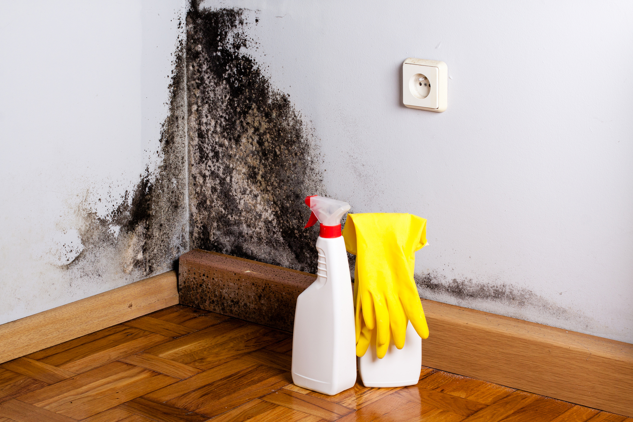 Black Mold Removal in Vancouver